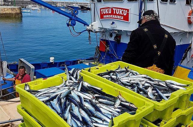 pesca anchoas